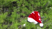 decorativo : Santa Claus Hat on pine tree in the forest Stock Footage
