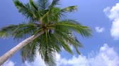 Tropical view with top of the coconut palm tree on the blue sky background, Maldives travel destination