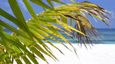 Tropical pristine beach with white sand and turquoise water through coconut palm tree leaf