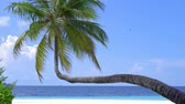 Tropical pristine beach with coconut palm