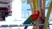 macaw parrot : Colorful parrot, outdoors
