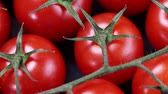 peasant : Ripe cherry tomatoes closeup on black background Stock Footage