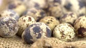 studentka : Uncooked quail eggs on burlap cloth. Rotating and closeup