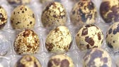 codorna : Uncooked quail eggs in pack. Rotating and closeup