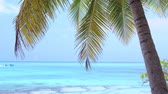 maledivy : Coconut palm tree on tropical shore
