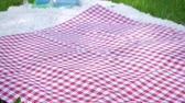 checker : Vegan picnic with healthy food in park outside at summer day