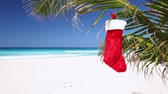 Канкун : Christmas stocking hanging on coconut palm tree Стоковые видеозаписи