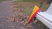 chovendo : Umbrella near bench in autumn park