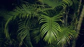 領土 : Palm tree leaves at the garden 動画素材
