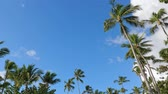 dominikanische republik : Top of coconut palm trees with clouds and blue sky background