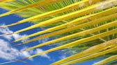 karaiby : Palm tree leaf over sky background