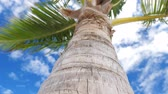 corteza : View from bottom on top of coconut palm tree with sky and clouds Archivo de Video