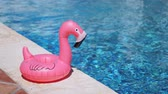 zwemring : Inflatable toy of pink flamingo near swimming pool at poolside Stockvideo