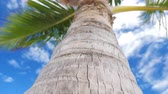 나무 껍질 : View from bottom on top of coconut palm tree with sky and clouds 무비클립