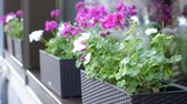 flower bed : Flowers growing in flowerbed at city Stock Footage