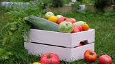 ládakeret : Vegetables in white wooden box at the garden, outdoor