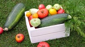 marrow : Vegetables in white wooden box at the garden, outdoor