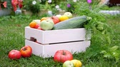 medula : Vegetables in white wooden box at the garden, outdoor