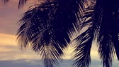 ハワイ : Sun light through coconut palm trees 動画素材