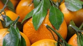 yaprak döken : A lot of tangerines with green leaves Stok Video