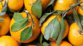 mandarijnen : A lot of tangerines with green leaves Stockvideo