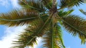 palmeras : View from bottom on top of coconut palm tree with sky and clouds Archivo de Video