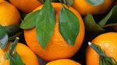 group of objects : Pile of tangerines with green leaves