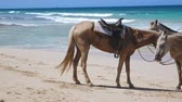 cheval bai : Horses on on macao beach