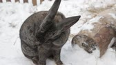 Rabbit sitting on the snow in the petting zoo