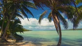 polinésia : Aitutaki Lagoon Panoramic Time Lapse Of Tropical Beach Reef And Coconut Palm Trees Swaying In Windy Cloudy Sky Over Blue Lagoon And White Sand And Ocean In The Cook Islands Polynesia South Pacific Vídeos