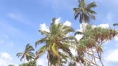 srilankan : Sky view of palm trees in the light wind and clouds passing by.