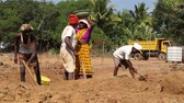 černoch : GOA, INDIA - 26 JANUARY 2015: Men digging soil that woman carries away in a head bowl. Dostupné videozáznamy