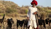 domestic : JODHPUR, INDIA - 13 FEBRUARY 2015: Indian cattle keeper walking down the field with cattle pasturing aside.