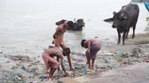 mangueira : VARANASI, INDIA - 25 FEBRUARY 2015: Group of boys playing at dirty shore of Ganges, with cows standing aside.