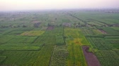 pole : Aerial view over a rural farmland field landscape with agricultural crops