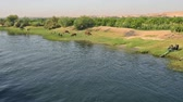 búfalo : Landscape scene of rural countryside field meadow by river in egypt africa with water buffalo bubalus bubalis livestock