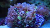 macro shot of pink coral reef underwater Stock Footage