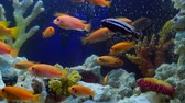 shoal of yellow vivid fish swim among coral reef in aquarium with air bubbles