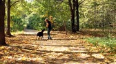 autumn : Woman playing with dog in park Stock Footage
