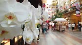 univerzální : JUL 01, 2018 MOSCOW, RUSSIA: Flowers with defocused GUM shopping mall on background Dostupné videozáznamy