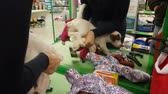 Blonde woman wear small white terrier puppy in the pet store. NOW 24, 2018 MOSCOW, RUSSIA Stock mozgókép