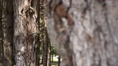 針葉樹の : Panorama in the coniferous forest. The camera looks out for a group of woods in the wild forest.