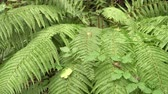 대칭 : Beautiful dense bush of fern in the wild summer forest after rain. The beauty of untouched nature