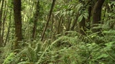 varens : Dense wild forest with fern thickets, untouched nature