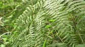 moha : green bush fern moves from the wind. young juicy fern leaves in summer
