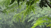 zawieszka : hard rain falling on tree in garden