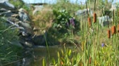 Pond in garden with reeds and small waterfall video