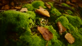 wedding ring : Wedding rings on green moss