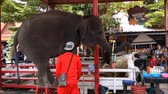 abroncs : Ayutthaya, Thailand - July 13 2017 : Daily elephant show elephant play hula hoop and standing on chair.
