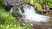 the rapid flow of pure mountain stream in a green grass Stock Footage